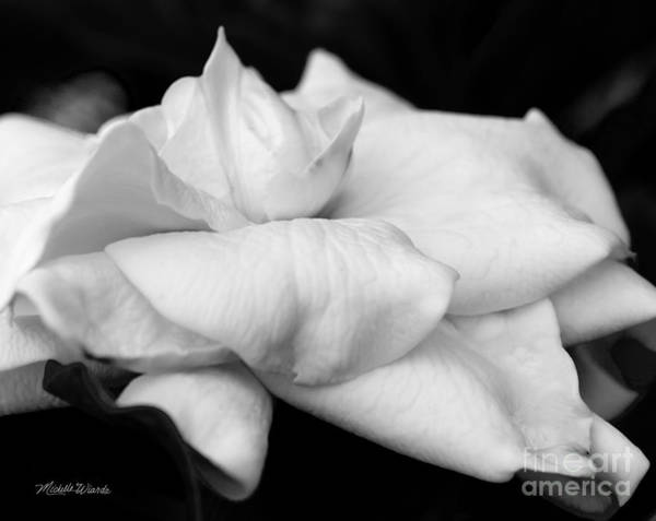 Photograph - Fragrant Petals by Michelle Constantine