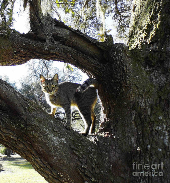 Photograph - Cat - Framed - By A - Tree by D Hackett