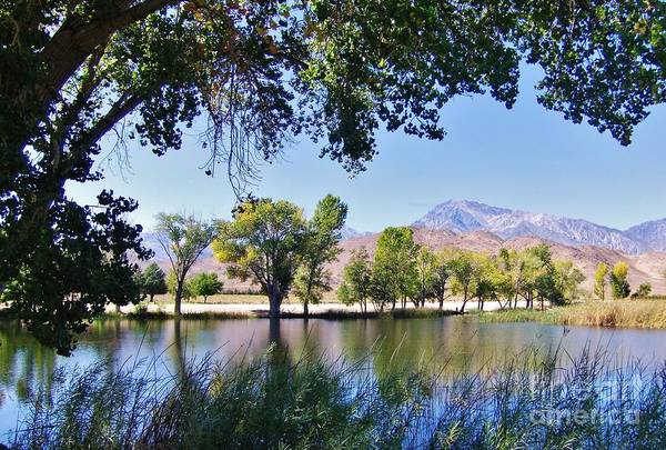 Bishop Hill Photograph - Framed In Mill Pond by Marilyn Diaz