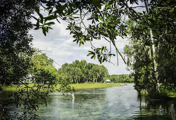 Photograph - Framing The Rainbow River by Judy Hall-Folde