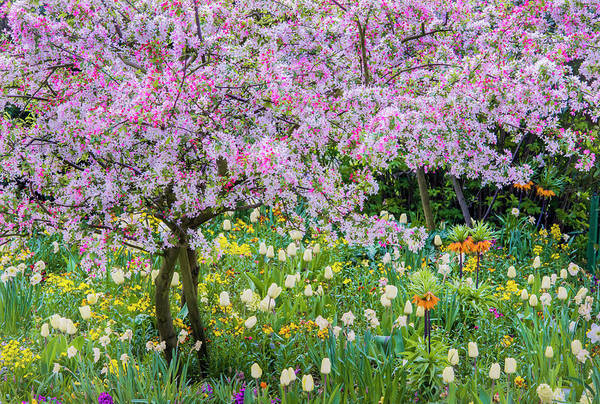 Giverny Photograph - France, Giverny Springtime In Claude by Jaynes Gallery