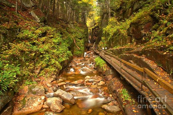 Photograph - Franconia Notch Flume Gorge New Hampshire by Adam Jewell