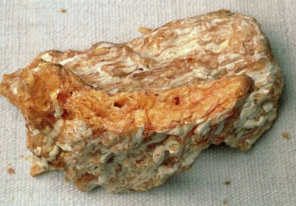 Medicinal Photograph - Frankincense Resin by Jerry Mason/science Photo Library