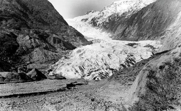 Wall Art - Photograph - Franz Joseph Glacier In 1956 by Nsidc, Wdc/science Photo Library