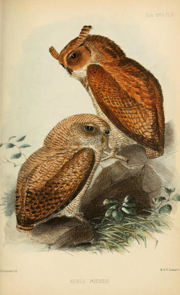Owl Painting - Fraser's Eagle Owl by Dreyer Wildlife Print Collections