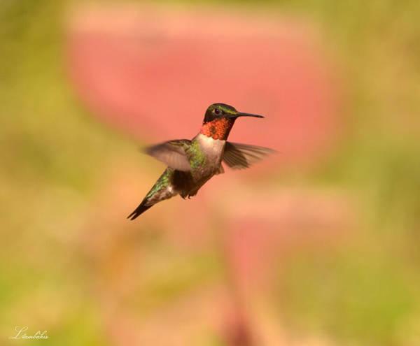 Photograph - Free As A Bird by Lori Tambakis