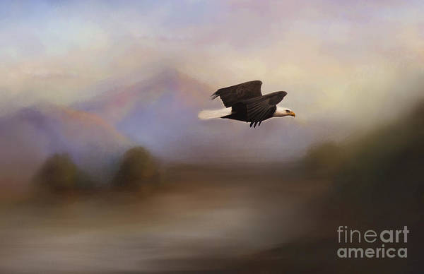 Photograph - Free Bird by Pam  Holdsworth