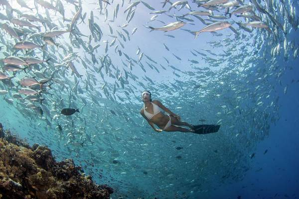 Trevally Photograph - Free Diver In School Of Fish by Scubazoo