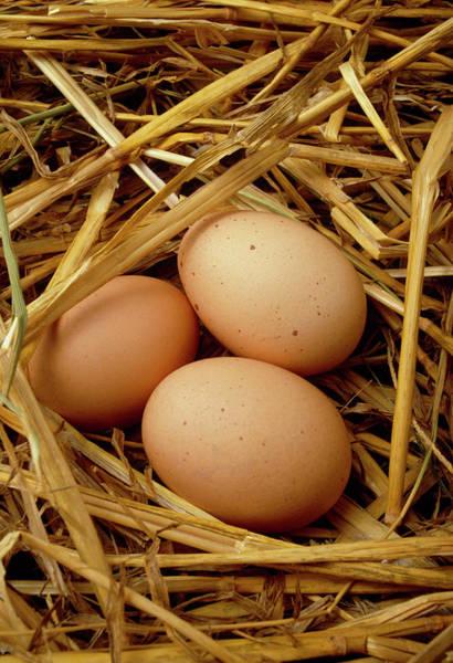 Free Range Photograph - Free-range Eggs by Tony Craddock/science Photo Library