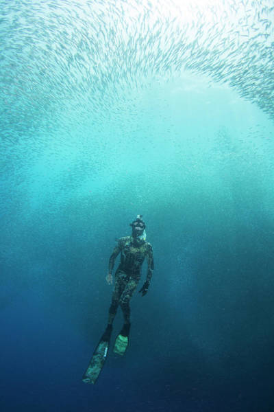 Wetsuit Wall Art - Photograph - Freediving by Scubazoo/science Photo Library