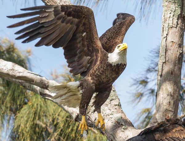 Photograph - Freedom by Doug McPherson