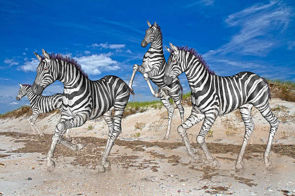 Fun Run Digital Art - Freedom Fun Forever by Betsy Knapp