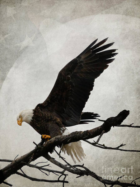 Photograph - Freedom by Beve Brown-Clark Photography