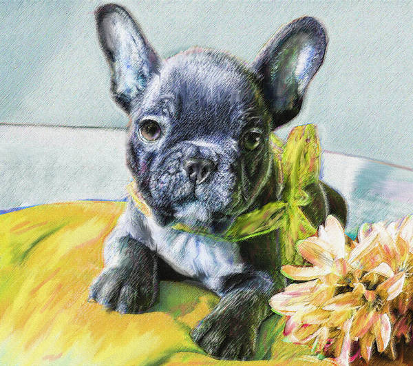 Wall Art - Digital Art - French Bulldog Puppy by Jane Schnetlage