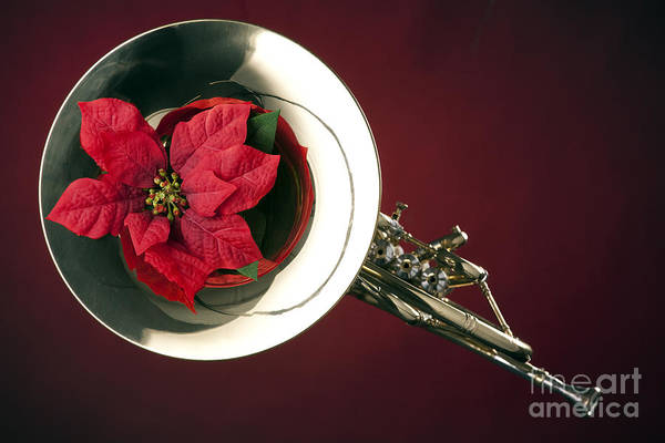 Photograph - French Horn And Red Flower Photograph In Color 3434.02 by M K Miller