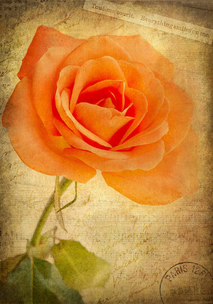 Photograph - French Rose by Kim Andelkovic