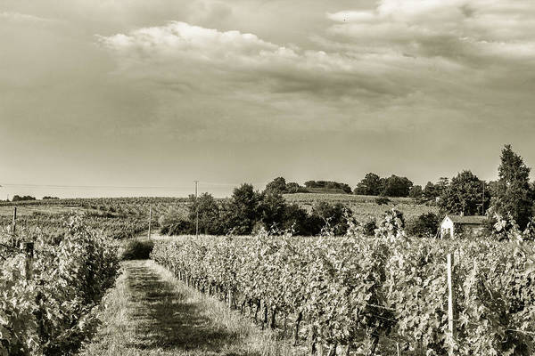 Photograph - French Vineyard Toned by Georgia Fowler