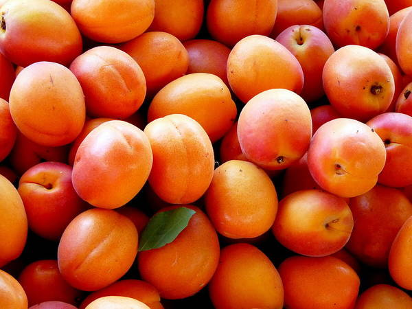 Photograph - Fresh Apricots by Jeff Lowe