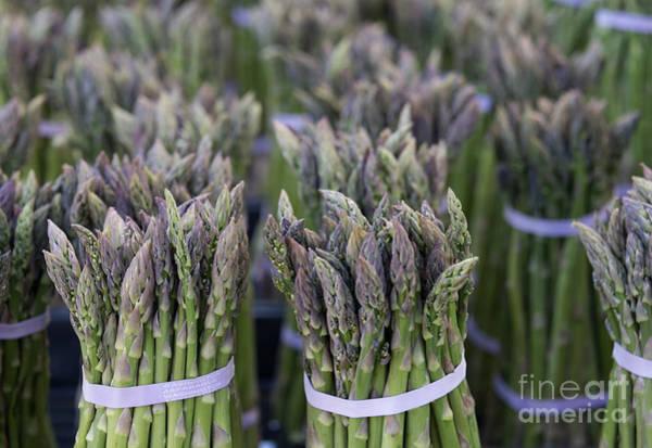 Spear Wall Art - Photograph - Fresh Asparagus by Mike  Dawson