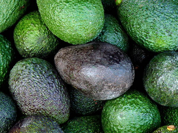 Photograph - Fresh Avocados  by Jeff Lowe