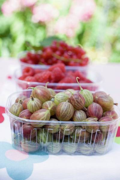 Wall Art - Photograph - Fresh Berries On A Table In A Garden by Eising Studio - Food Photo and Video