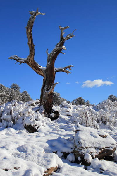Photograph - Fresh Blanket Of Snow by Shane Bechler