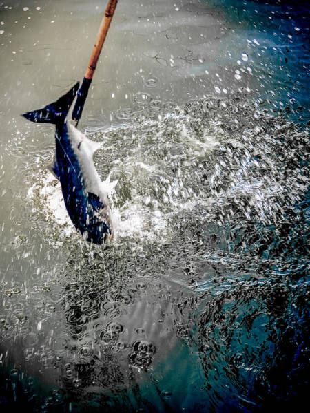 Photograph - Fresh Catch by Jim DeLillo
