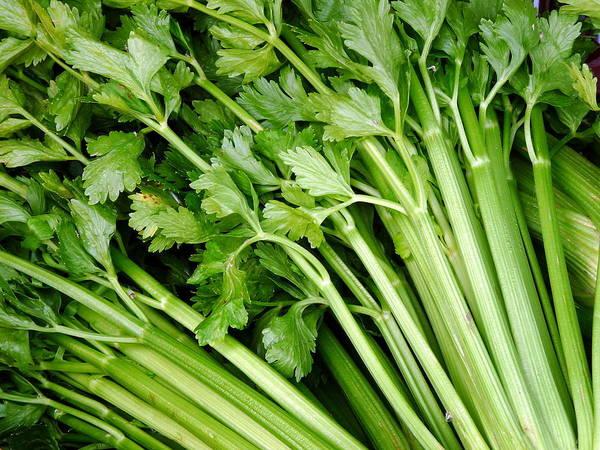Photograph - Fresh Celery by Jeff Lowe