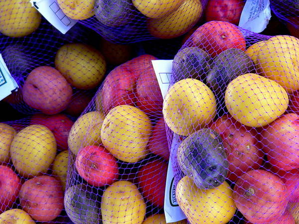 Photograph - Fresh Colorful Potatoes  by Jeff Lowe