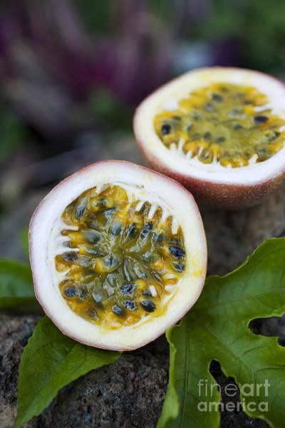 Photograph - Fresh Cut Lilikoi Fruit by Charmian Vistaunet