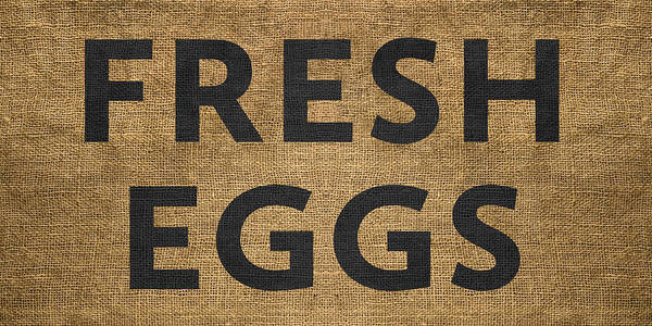 Digital Art - Fresh Eggs by Nancy Ingersoll