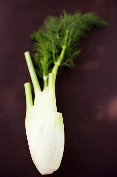 Vegies Photograph - Fresh Florence Fennel by Foodcollection
