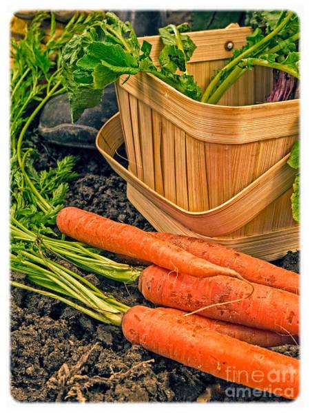 Wall Art - Photograph - Fresh Garden Vegetables by Edward Fielding
