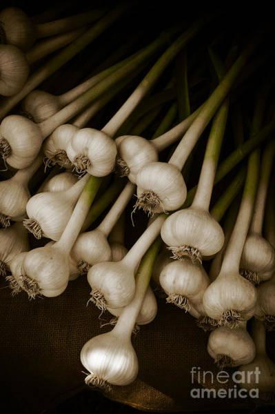 Stalk Photograph - Fresh Garlic by Edward Fielding