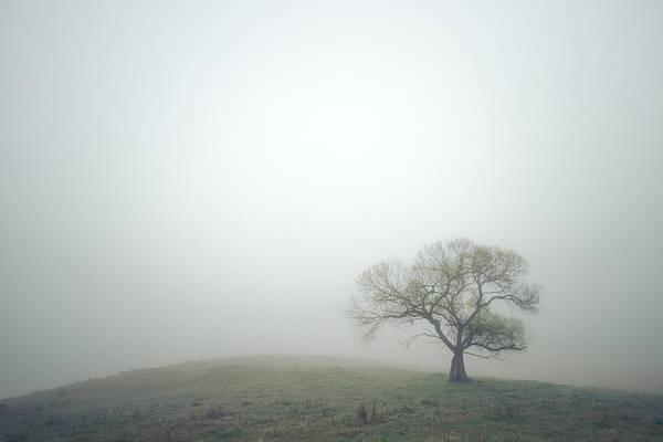Photograph - Fresh Green And Morning Fog by Alexander Kunz