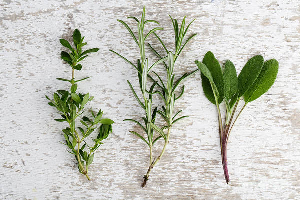 Wall Art - Photograph - Fresh Herbs by Nailia Schwarz