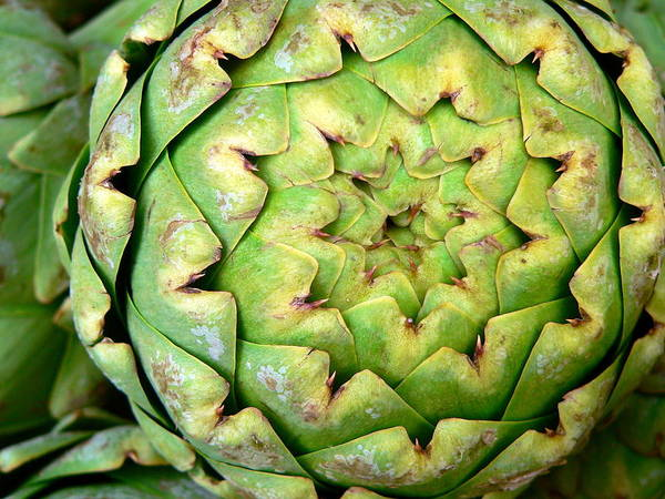 Photograph - Fresh Large Artichoke by Jeff Lowe