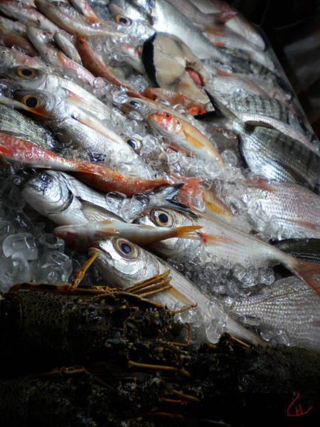 Photograph - Fresh Morning Dorado And Lobster Swim Catch For Dinner Santorini Greece  by Colette V Hera  Guggenheim