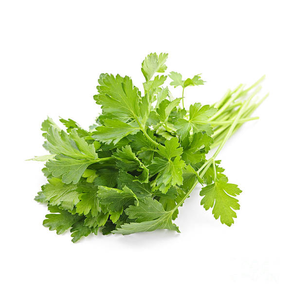 Green Vegetable Photograph - Fresh Parsley by Elena Elisseeva