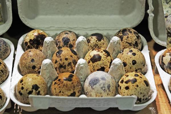 Foodstuff Photograph - Fresh Quail Eggs In A Box by Bildagentur-online/mcphoto-schulz
