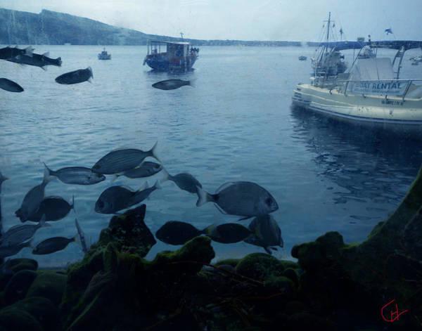 Photograph - Fresh Santorini Fish Greece  by Colette V Hera  Guggenheim
