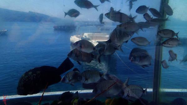 Photograph - Fresh Santorini Island Fish Greece by Colette V Hera  Guggenheim