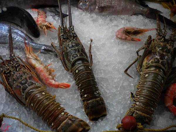 Photograph - Fresh Santorini Lobsters by Colette V Hera  Guggenheim