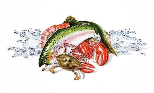 Wall Art - Photograph - Fresh Seafood by Leonello Calvetti/science Photo Library