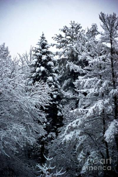 Photograph - Fresh Snow by Frank J Casella