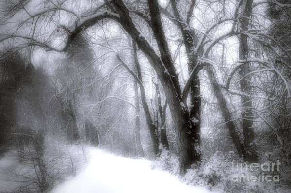 Photograph - Fresh Snow On The Forestbrook Path by Tara Turner