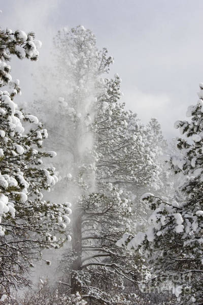 Wall Art - Photograph - Fresh Snow by Steve Krull