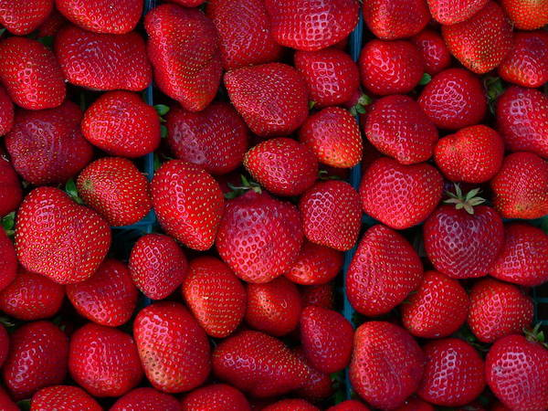 Photograph - Fresh Strawberries by Jeff Lowe