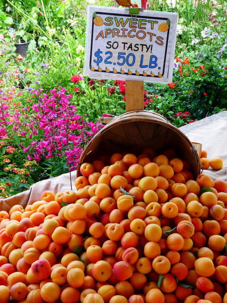 Photograph - Fresh Sweet Apricots by Jeff Lowe