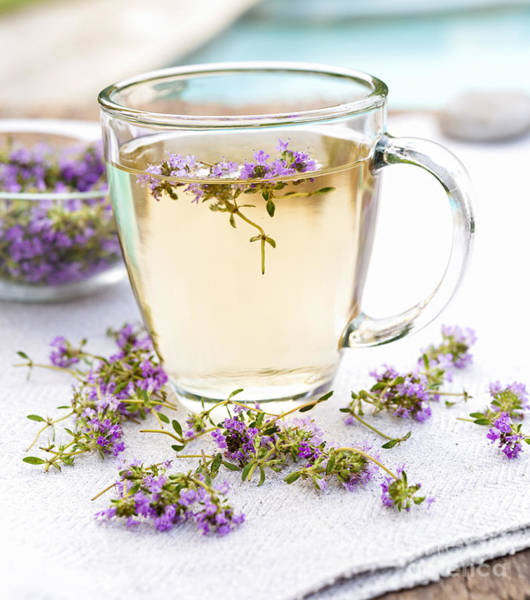 Wall Art - Photograph - Fresh Thyme Tea by Elena Elisseeva